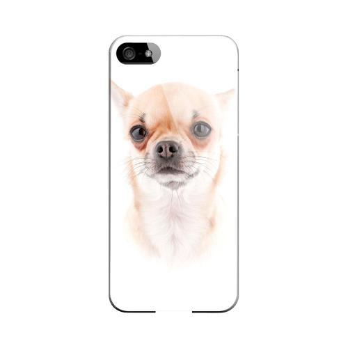 Chihuahua Impact Resistant Geeks Designer Line Slim Hard Case for Apple iPhone 5/5S